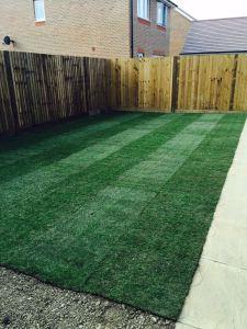 Premium Lawn Turf